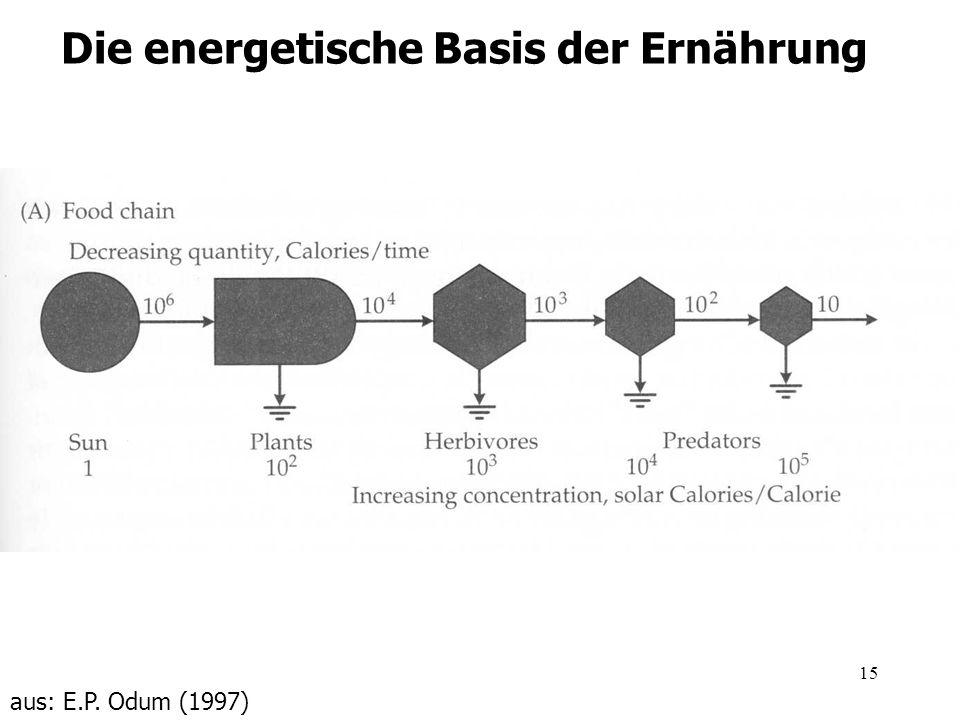 15 Die energetische Basis der Ernährung aus: E.P. Odum (1997)