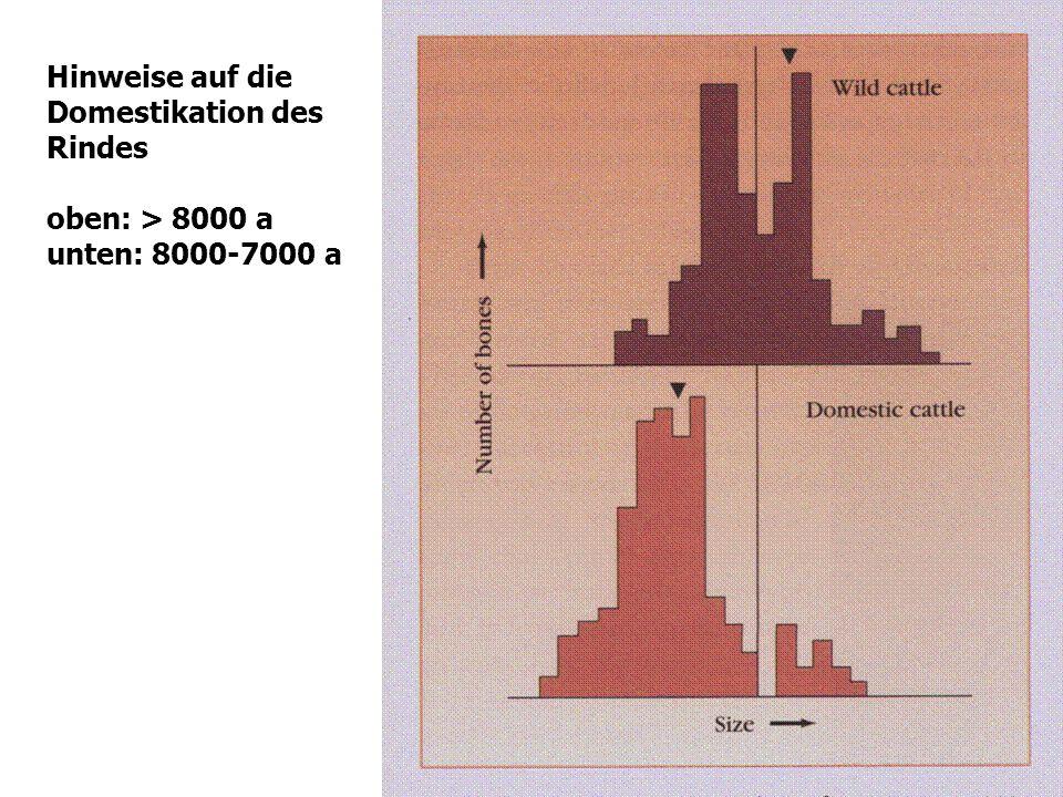 24 Hinweise auf die Domestikation des Rindes oben: > 8000 a unten: 8000-7000 a