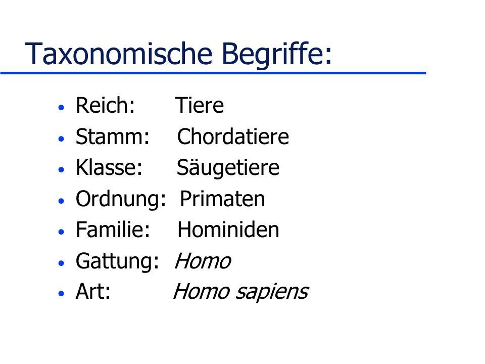 Taxonomische Begriffe: Reich: Tiere Stamm: Chordatiere Klasse: Säugetiere Ordnung: Primaten Familie: Hominiden Gattung: Homo Art: Homo sapiens