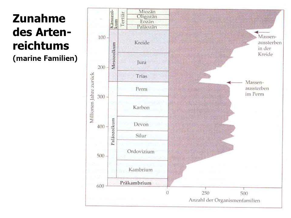 Zunahme des Arten- reichtums (marine Familien)