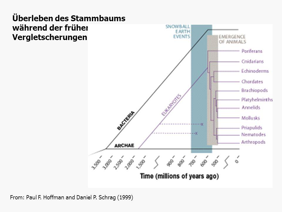 From: Paul F. Hoffman and Daniel P. Schrag (1999) Überleben des Stammbaums während der frühen Vergletscherungen