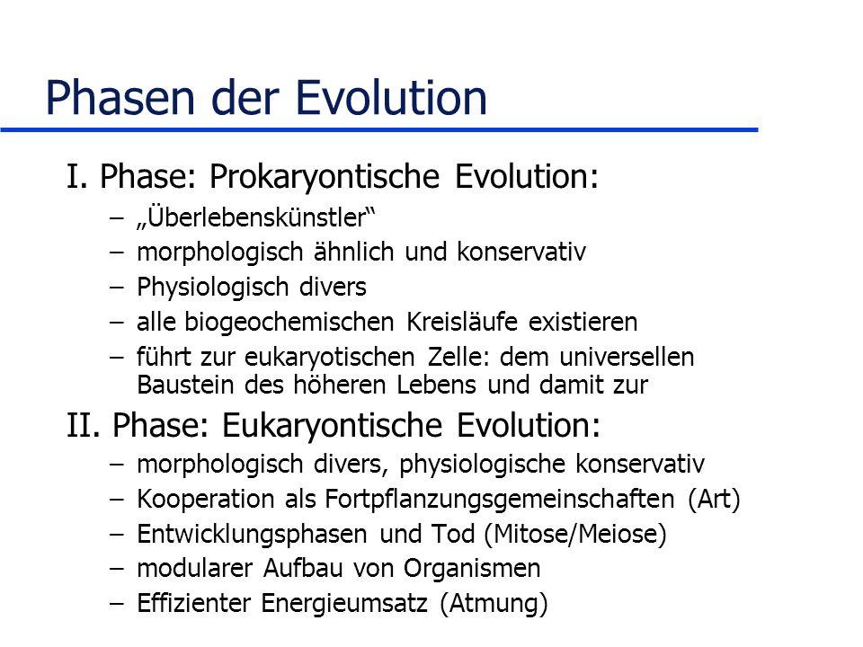 Phasen der Evolution I. Phase: Prokaryontische Evolution: –Überlebenskünstler –morphologisch ähnlich und konservativ –Physiologisch divers –alle bioge