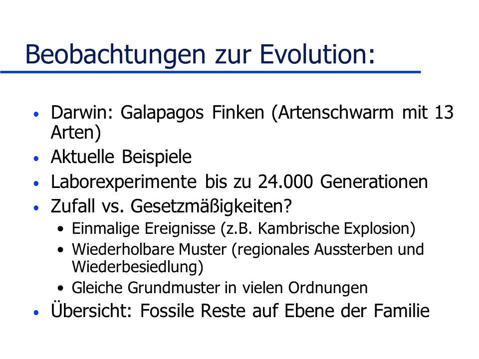 Beobachtungen zur Evolution: Darwin: Galapagos Finken (Artenschwarm mit 13 Arten) Aktuelle Beispiele Laborexperimente bis zu 24.000 Generationen Zufal