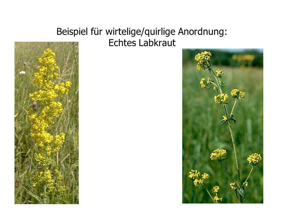 Ansätze der ökologischen Modellbildung Natural System ENCODING DECODING Formal System INFERENCE CAUSALITY 1 2 4 3 biologisch def.