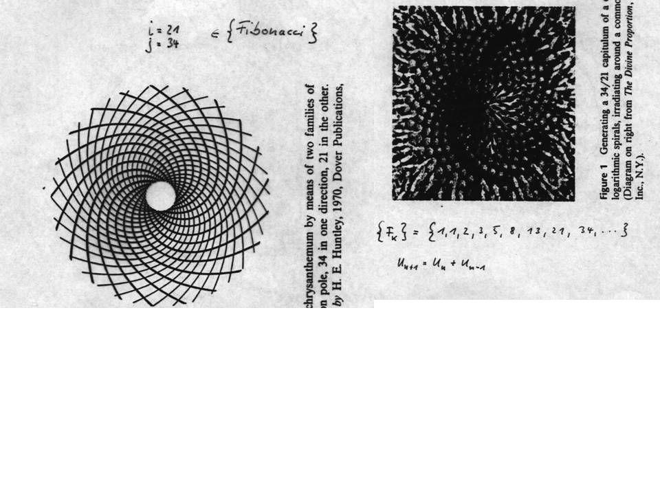 Ein weiteres Beispiel für Rekursion: Die Ackermann Funktion: Übungsaufgabe: Die Ackermann Funktion ist nicht primitiv rekursiv, aber berechenbar (mit einer TURING Maschine) primitiv rekursiv: Nachfolger-Funktion