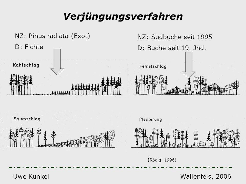 Uwe Kunkel Wallenfels, 2006 Verjüngungsverfahren ( Rödig, 1996) NZ: Pinus radiata (Exot) D: Fichte NZ: Südbuche seit 1995 D: Buche seit 19. Jhd.