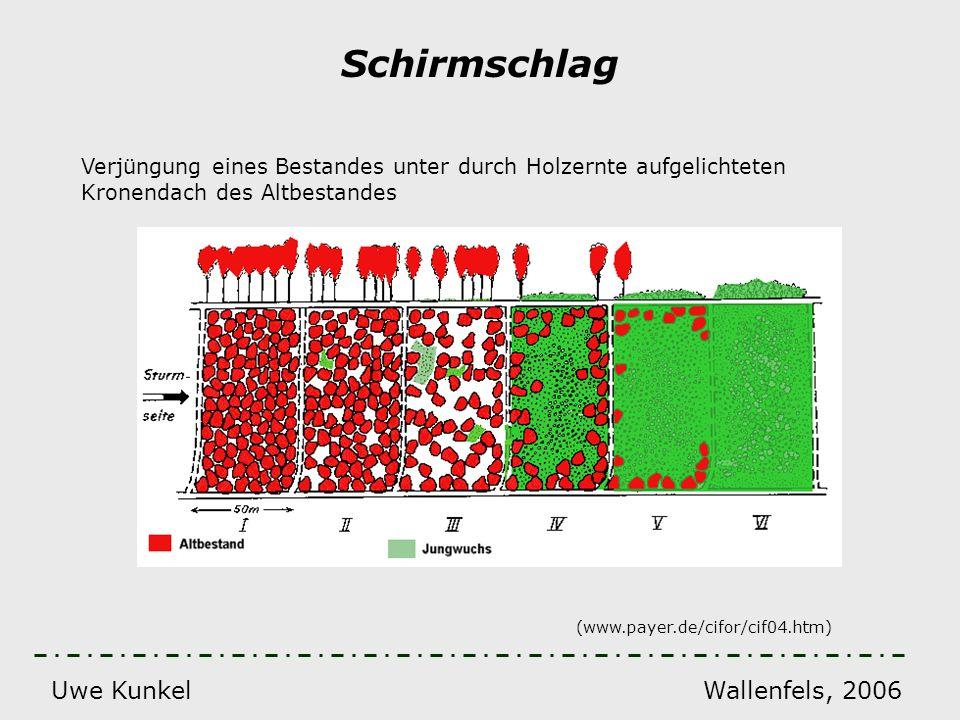 Uwe Kunkel Wallenfels, 2006 Schirmschlag Verjüngung eines Bestandes unter durch Holzernte aufgelichteten Kronendach des Altbestandes (www.payer.de/cif