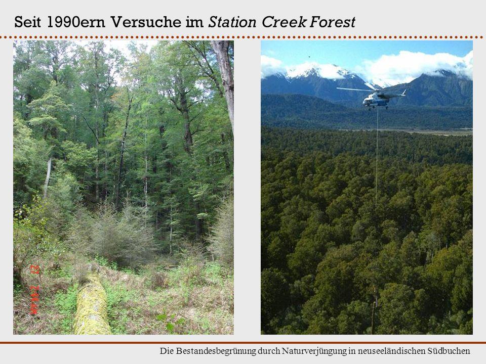 Die Bestandesbegrünung durch Naturverjüngung in neuseeländischen Südbuchen Seit 1990ern Versuche im Station Creek Forest