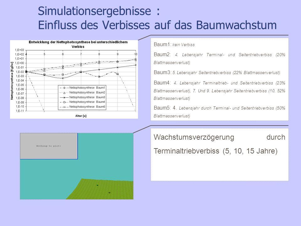 Simulationsergebnisse : Einfluss des Verbisses auf das Baumwachstum Wachstumsverzögerung durch Terminaltriebverbiss (5, 10, 15 Jahre) Baum1: kein Verb
