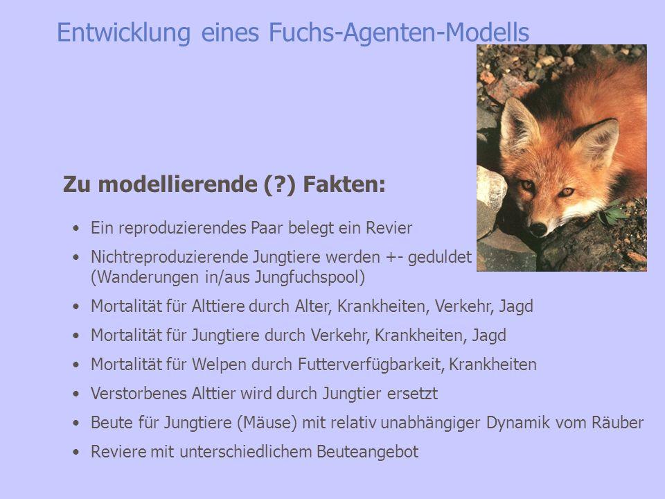 Entwicklung eines Fuchs-Agenten-Modells Ein reproduzierendes Paar belegt ein Revier Nichtreproduzierende Jungtiere werden +- geduldet (Wanderungen in/