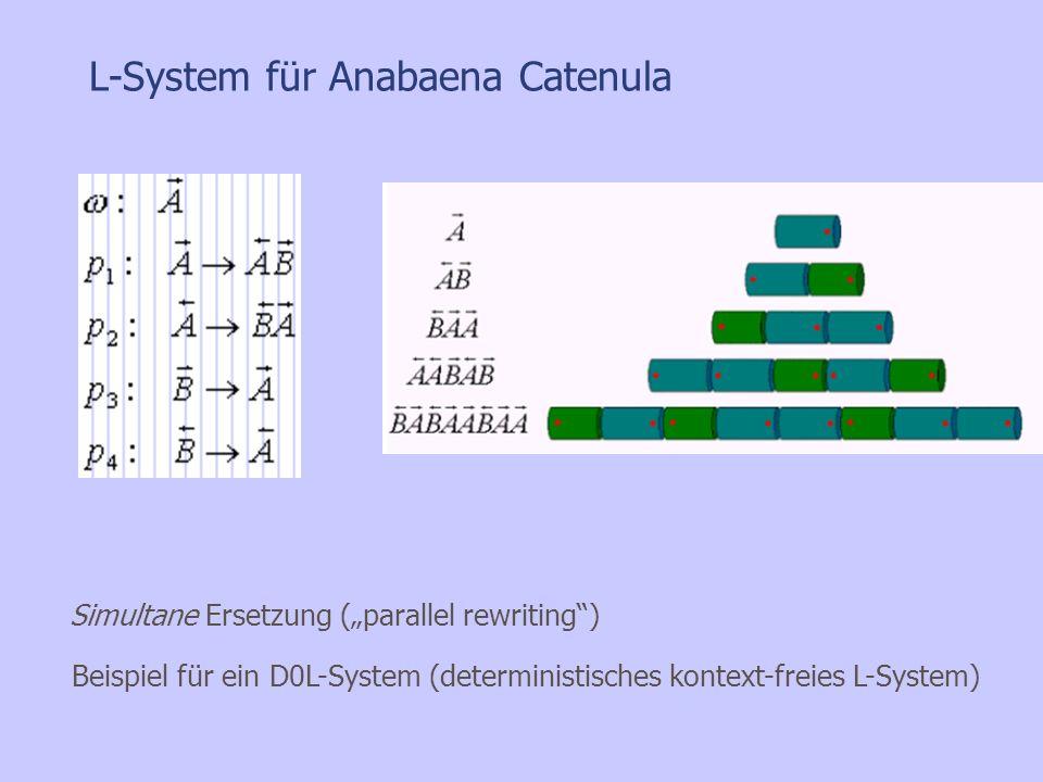 L-System für Anabaena Catenula Beispiel für ein D0L-System (deterministisches kontext-freies L-System) Simultane Ersetzung (parallel rewriting)