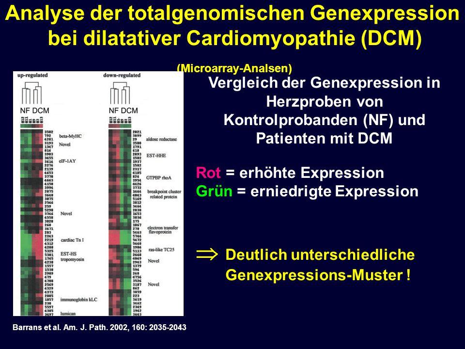 Analyse der totalgenomischen Genexpression bei dilatativer Cardiomyopathie (DCM) (Microarray-Analsen) Vergleich der Genexpression in Herzproben von Ko