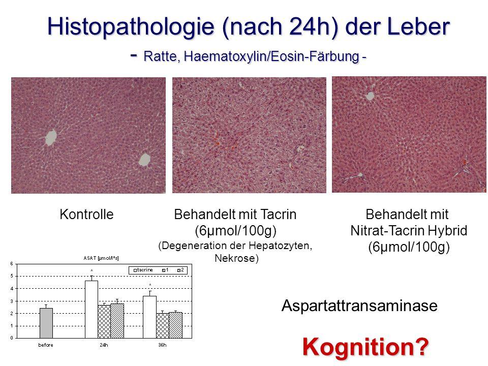 Histopathologie (nach 24h) der Leber - Ratte, Haematoxylin/Eosin-Färbung - KontrolleBehandelt mit Tacrin (6µmol/100g) (Degeneration der Hepatozyten, Nekrose) Behandelt mit Nitrat-Tacrin Hybrid (6µmol/100g) Aspartattransaminase Kognition?