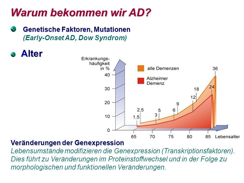 Warum bekommen wir AD? Warum bekommen wir AD? Genetische Faktoren, Mutationen Genetische Faktoren, Mutationen (Early-Onset AD, Dow Syndrom) Alter Alte