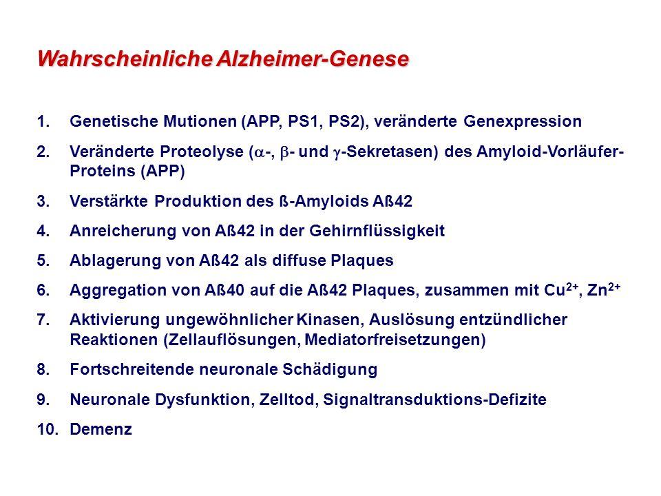 Wahrscheinliche Alzheimer-Genese 1.Genetische Mutionen (APP, PS1, PS2), veränderte Genexpression 2.Veränderte Proteolyse ( -, - und -Sekretasen) des Amyloid-Vorläufer- Proteins (APP) 3.Verstärkte Produktion des ß-Amyloids Aß42 4.Anreicherung von Aß42 in der Gehirnflüssigkeit 5.Ablagerung von Aß42 als diffuse Plaques 6.Aggregation von Aß40 auf die Aß42 Plaques, zusammen mit Cu 2+, Zn 2+ 7.Aktivierung ungewöhnlicher Kinasen, Auslösung entzündlicher Reaktionen (Zellauflösungen, Mediatorfreisetzungen) 8.Fortschreitende neuronale Schädigung 9.Neuronale Dysfunktion, Zelltod, Signaltransduktions-Defizite 10.Demenz