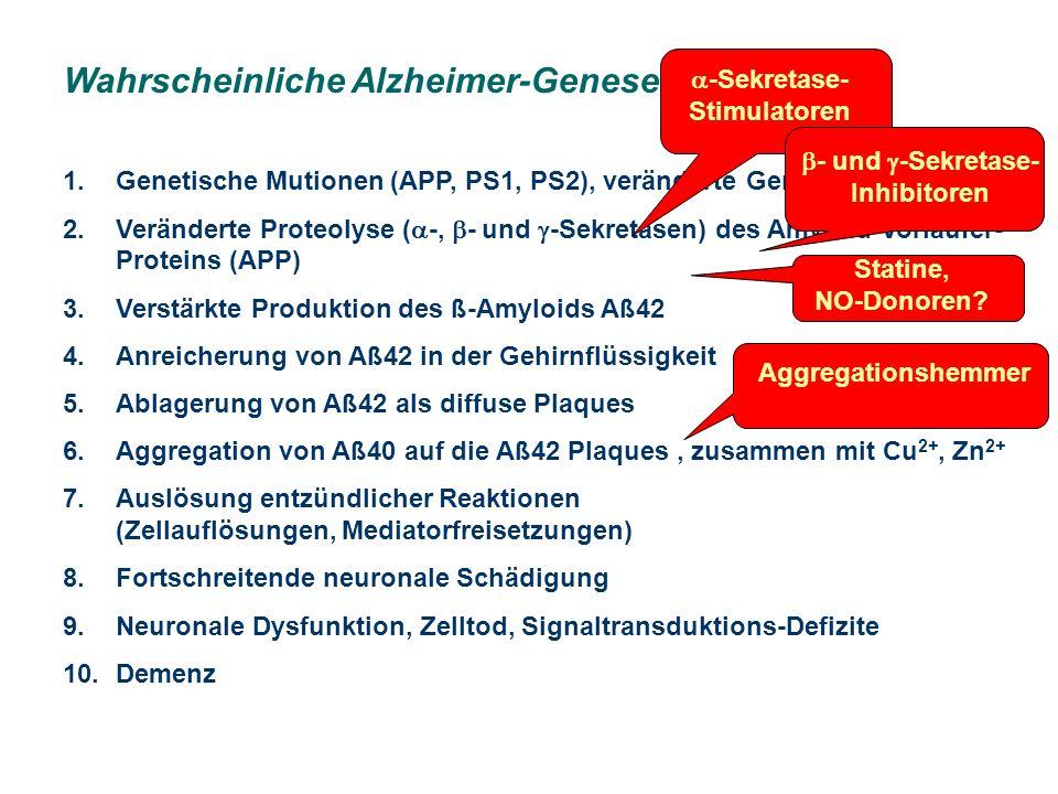 Wahrscheinliche Alzheimer-Genese 1.Genetische Mutionen (APP, PS1, PS2), veränderte Genexpression 2.Veränderte Proteolyse ( -, - und -Sekretasen) des Amyloid-Vorläufer- Proteins (APP) 3.Verstärkte Produktion des ß-Amyloids Aß42 4.Anreicherung von Aß42 in der Gehirnflüssigkeit 5.Ablagerung von Aß42 als diffuse Plaques 6.Aggregation von Aß40 auf die Aß42 Plaques, zusammen mit Cu 2+, Zn 2+ 7.Auslösung entzündlicher Reaktionen (Zellauflösungen, Mediatorfreisetzungen) 8.Fortschreitende neuronale Schädigung 9.Neuronale Dysfunktion, Zelltod, Signaltransduktions-Defizite 10.Demenz -Sekretase- Stimulatoren - und -Sekretase- Inhibitoren Statine, NO-Donoren.