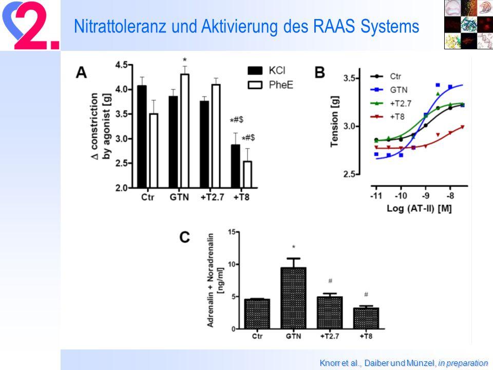 Knorr et al., Daiber und Münzel, in preparation Nitrattoleranz und Aktivierung des RAAS Systems