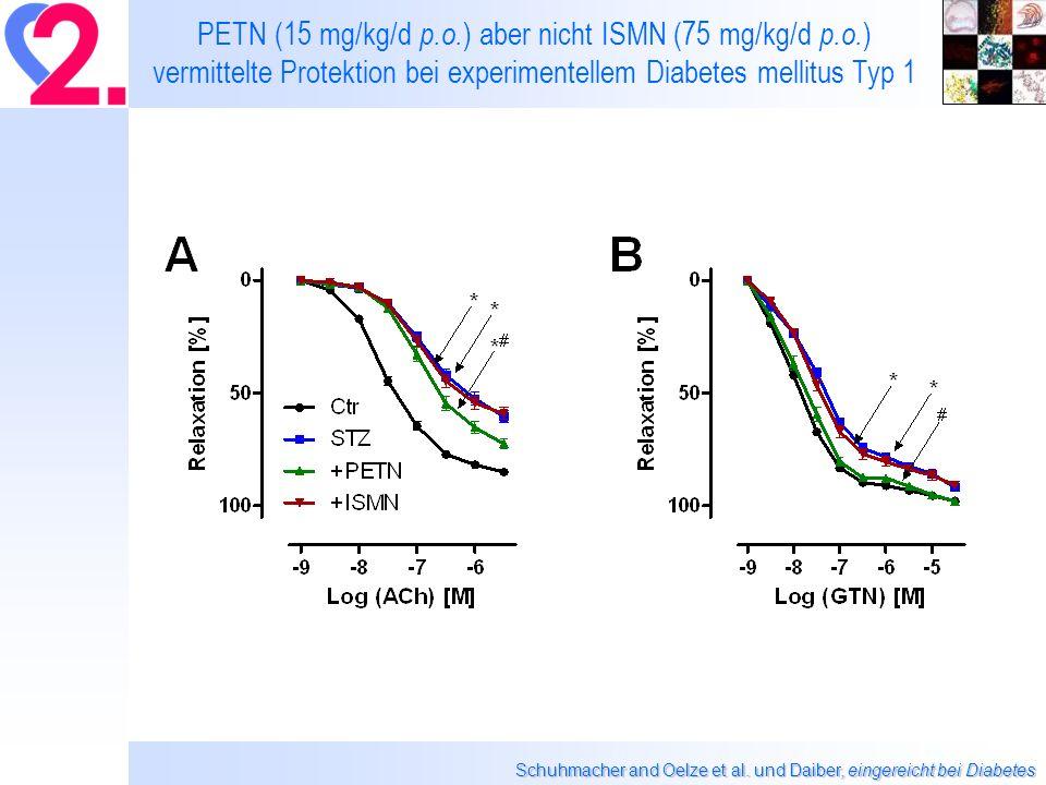 PETN (15 mg/kg/d p.o.) aber nicht ISMN (75 mg/kg/d p.o.