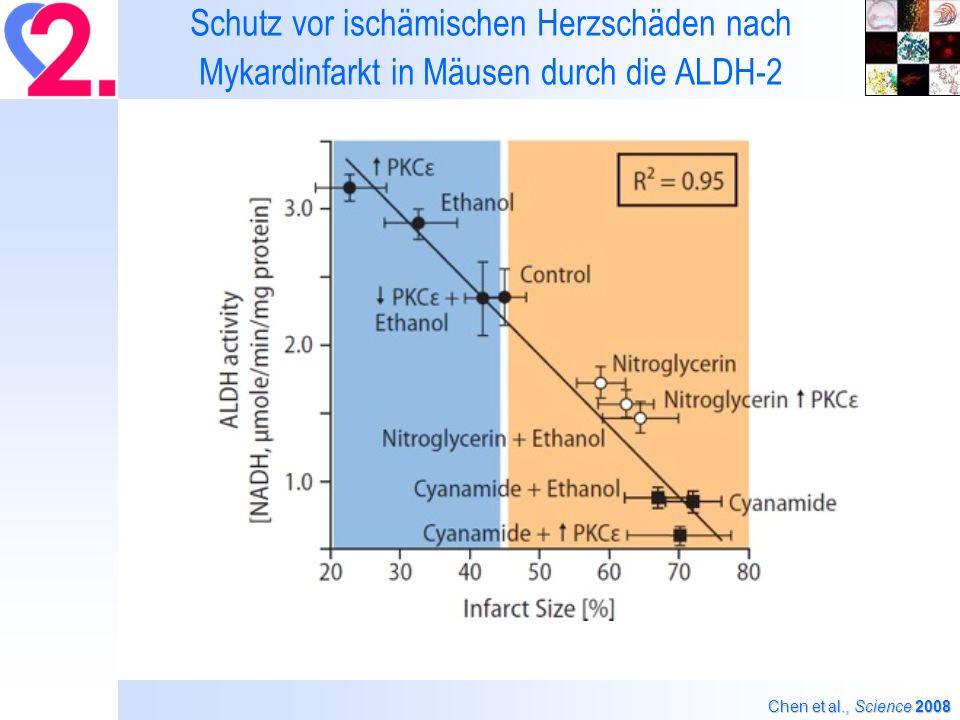 Schutz vor ischämischen Herzschäden nach Mykardinfarkt in Mäusen durch die ALDH-2 Chen et al., Science 2008