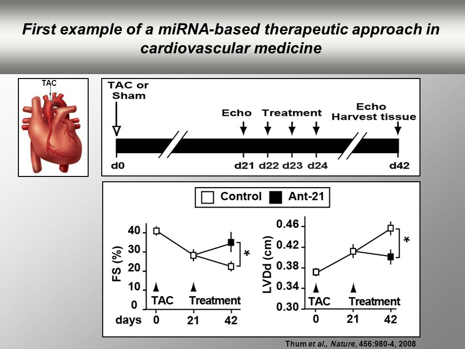 TAC Thum et al., Nature, 456:980-4, 2008 First example of a miRNA-based therapeutic approach in cardiovascular medicine