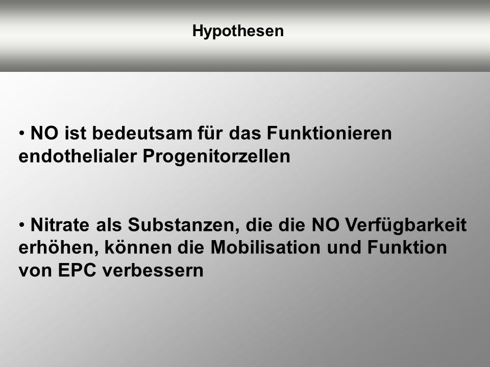 Hypothesen NO ist bedeutsam für das Funktionieren endothelialer Progenitorzellen Nitrate als Substanzen, die die NO Verfügbarkeit erhöhen, können die