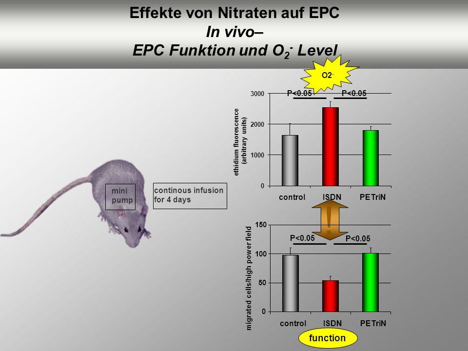 mini pump continous infusion for 4 days Effekte von Nitraten auf EPC In vivo– EPC Funktion und O 2 - Level ! O2 - function P<0.05 0 1000 2000 3000 con