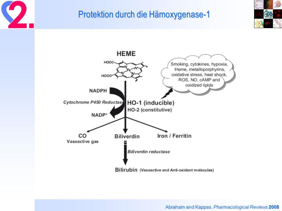 Nitroglyzerin-abhängige Inaktivierung der isolierten ALDH-2 Anhand der NADH (340 nm) Bildung Beretta et al.