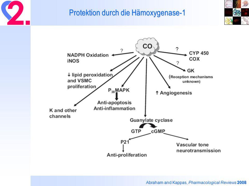 Eigene Befunde mit isolierter ALDH-2