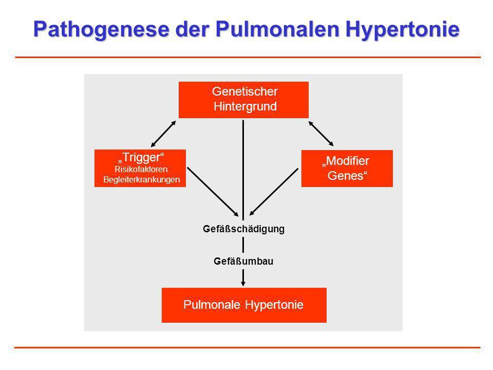 Pathogenese der Pulmonalen Hypertonie Genetischer Hintergrund Pulmonale Hypertonie Modifier Genes Trigger Risikofaktoren Begleiterkrankungen Gefäßschä