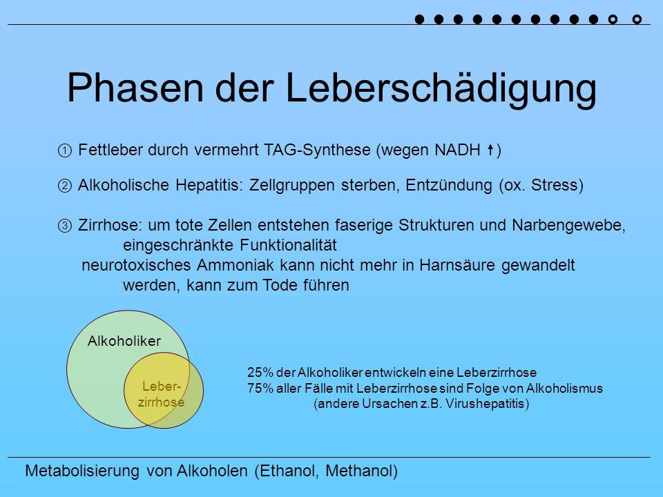 Metabolisierung von Alkoholen (Ethanol, Methanol) Phasen der Leberschädigung Fettleber durch vermehrt TAG-Synthese (wegen NADH ) Alkoholiker Leber- zirrhose 25% der Alkoholiker entwickeln eine Leberzirrhose 75% aller Fälle mit Leberzirrhose sind Folge von Alkoholismus (andere Ursachen z.B.