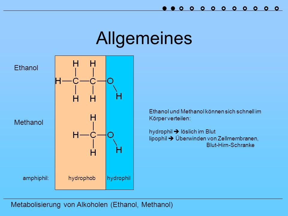 Metabolisierung von Alkoholen (Ethanol, Methanol) Allgemeines Ethanol Methanol amphiphil: hydrophob hydrophil Ethanol und Methanol können sich schnell im Körper verteilen: hydrophil löslich im Blut lipophil Überwinden von Zellmembranen, Blut-Hirn-Schranke