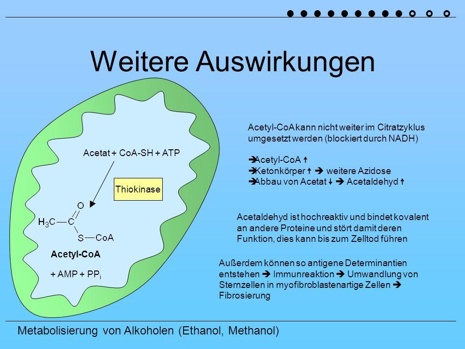 Metabolisierung von Alkoholen (Ethanol, Methanol) Weitere Auswirkungen Acetyl-CoA Acetat + CoA-SH + ATP + AMP + PP i Thiokinase Acetyl-CoA kann nicht