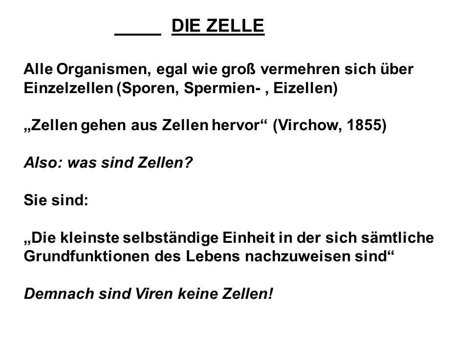 DIE ZELLE Alle Organismen, egal wie groß vermehren sich über Einzelzellen (Sporen, Spermien-, Eizellen) Zellen gehen aus Zellen hervor (Virchow, 1855) Also: was sind Zellen.
