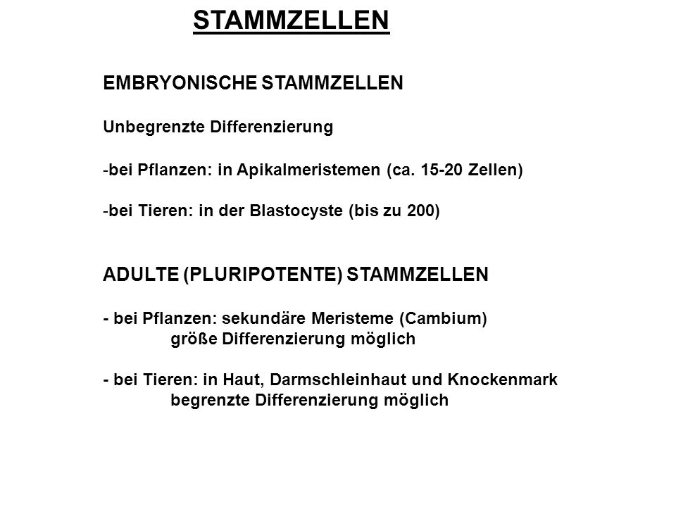 STAMMZELLEN EMBRYONISCHE STAMMZELLEN Unbegrenzte Differenzierung -bei Pflanzen: in Apikalmeristemen (ca.