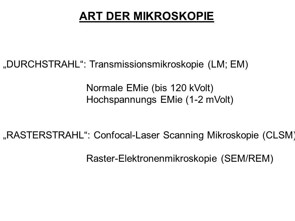 ART DER MIKROSKOPIE DURCHSTRAHL: Transmissionsmikroskopie (LM; EM) Normale EMie (bis 120 kVolt) Hochspannungs EMie (1-2 mVolt) RASTERSTRAHL: Confocal-