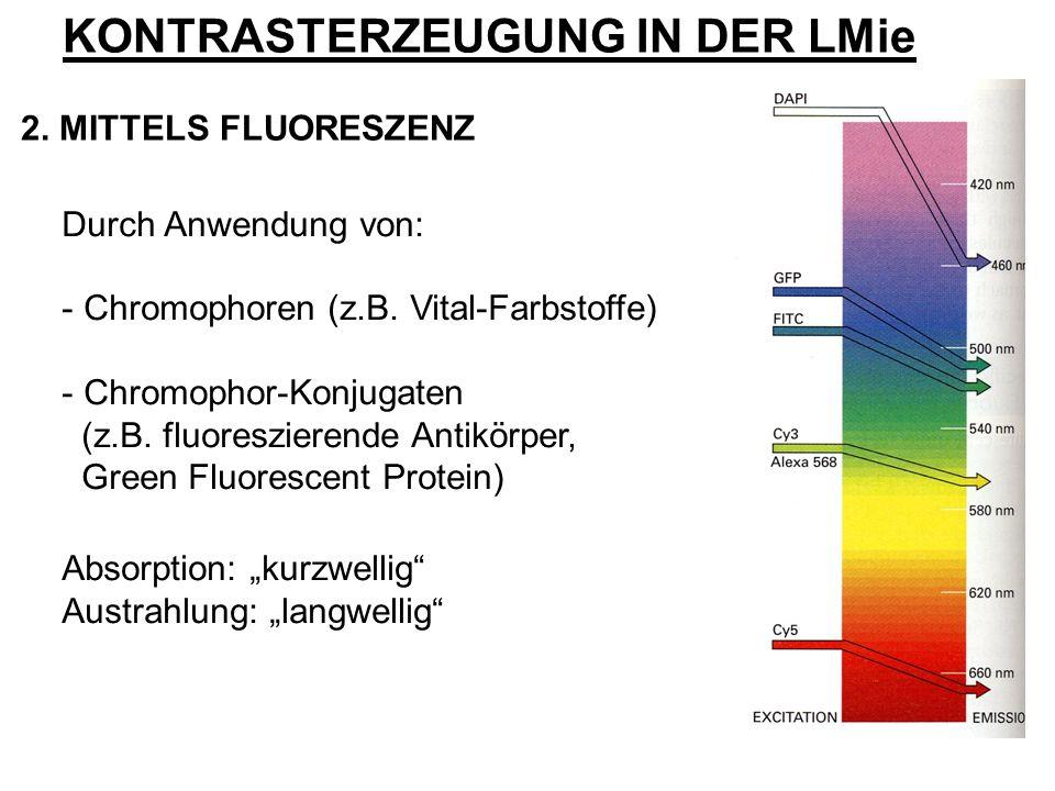 Durch Anwendung von: - Chromophoren (z.B. Vital-Farbstoffe) - Chromophor-Konjugaten (z.B. fluoreszierende Antikörper, Green Fluorescent Protein) Absor