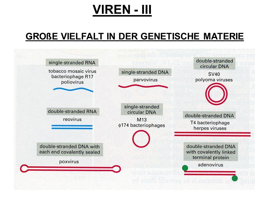 VIREN - III GROßE VIELFALT IN DER GENETISCHE MATERIE