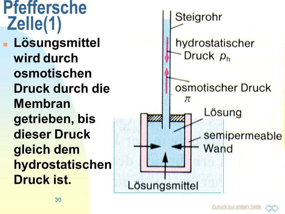 Zurück zur ersten Seite 30 Pfeffersche Zelle(1) Lösungsmittel wird durch osmotischen Druck durch die Membran getrieben, bis dieser Druck gleich dem hy
