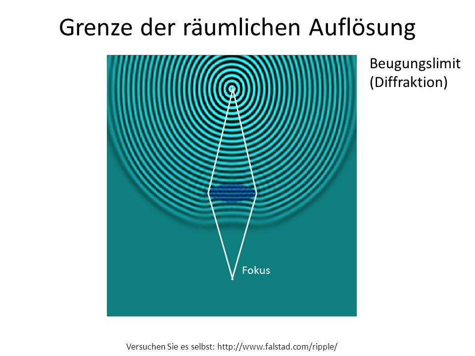 Grenze der räumlichen Auflösung Versuchen Sie es selbst: http://www.falstad.com/ripple/ Fokus Beugungslimit (Diffraktion)