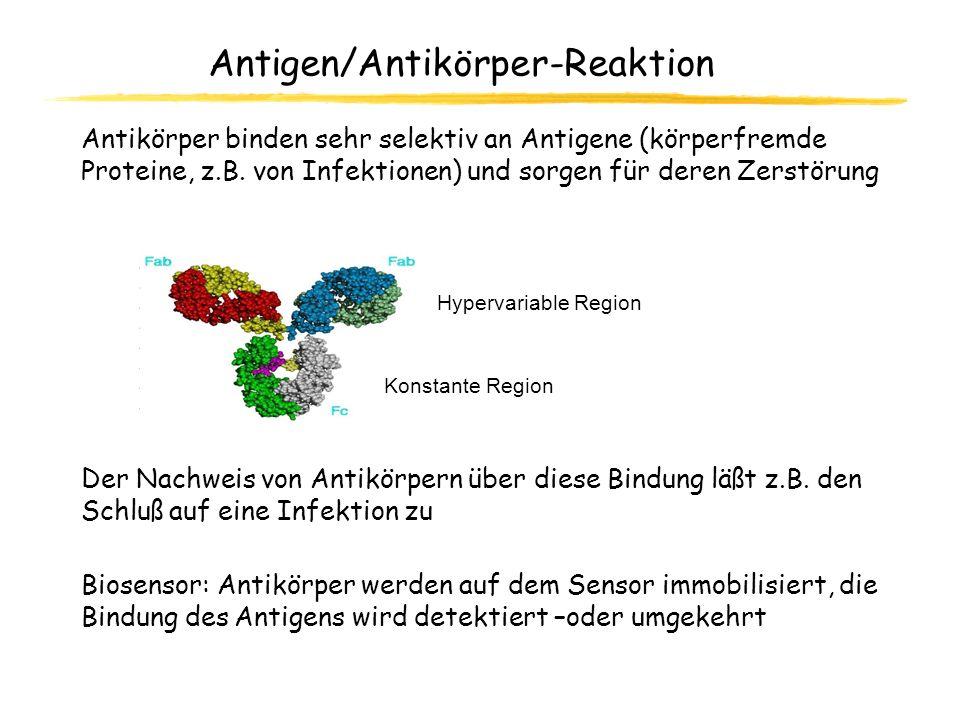 Antigen/Antikörper-Reaktion Antikörper binden sehr selektiv an Antigene (körperfremde Proteine, z.B. von Infektionen) und sorgen für deren Zerstörung