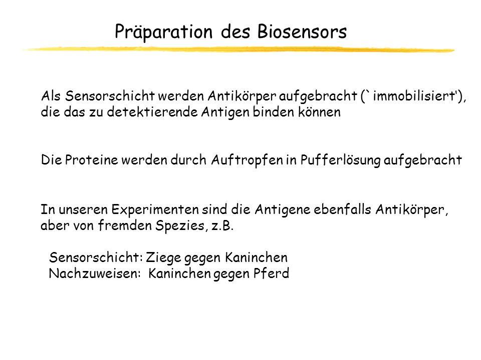Präparation des Biosensors In unseren Experimenten sind die Antigene ebenfalls Antikörper, aber von fremden Spezies, z.B. Sensorschicht: Ziege gegen K