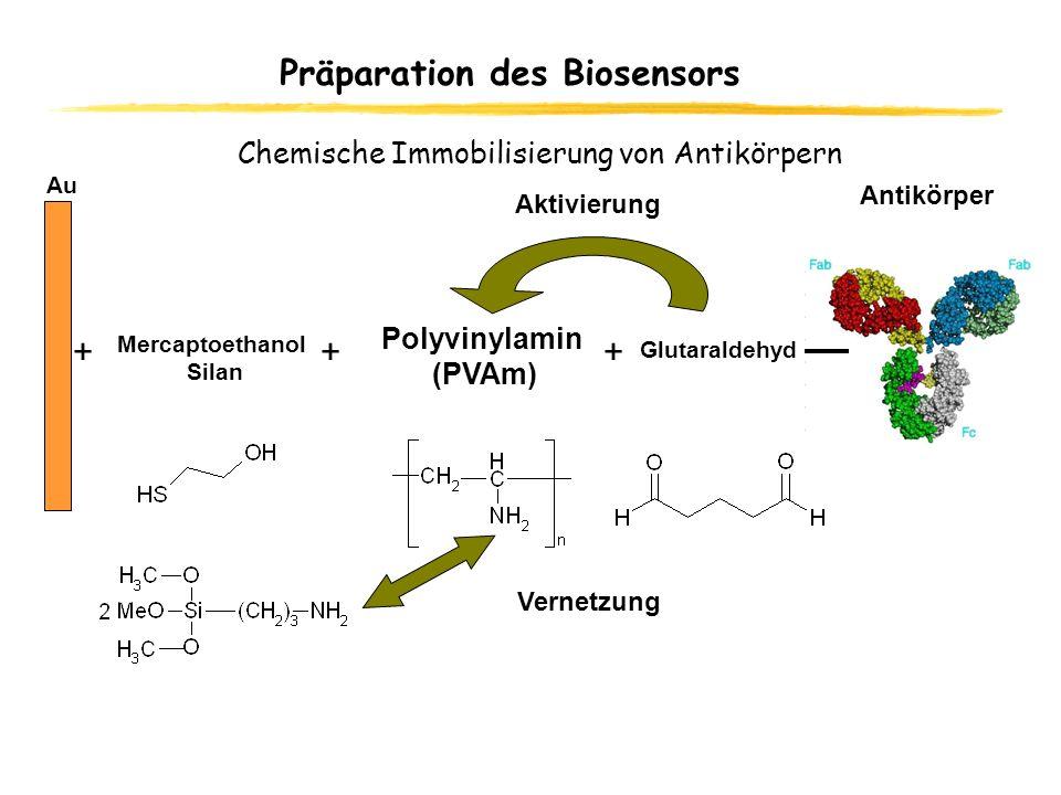 Präparation des Biosensors Au + Polyvinylamin (PVAm) Mercaptoethanol Silan + Antikörper Glutaraldehyd + Aktivierung Vernetzung Chemische Immobilisieru