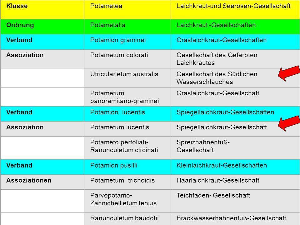 11 KlassePotameteaLaichkraut-und Seerosen-Gesellschaft OrdnungPotametaliaLaichkraut -Gesellschaften VerbandPotamion gramineiGraslaichkraut-Gesellschaf
