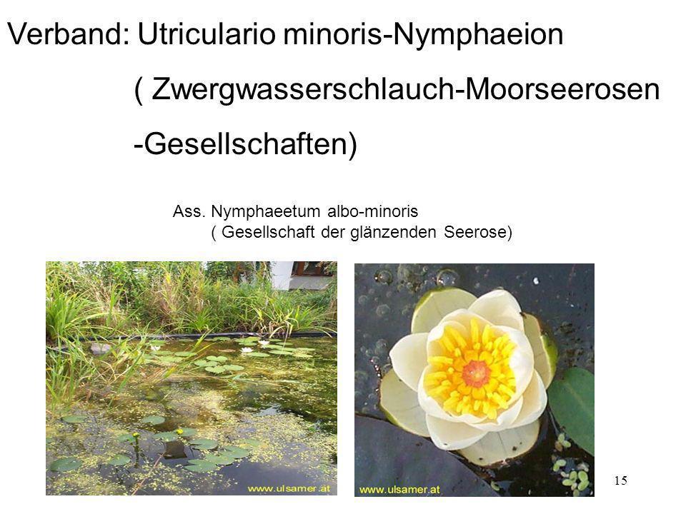 15 Verband: Utriculario minoris-Nymphaeion ( Zwergwasserschlauch-Moorseerosen -Gesellschaften) Ass. Nymphaeetum albo-minoris ( Gesellschaft der glänze