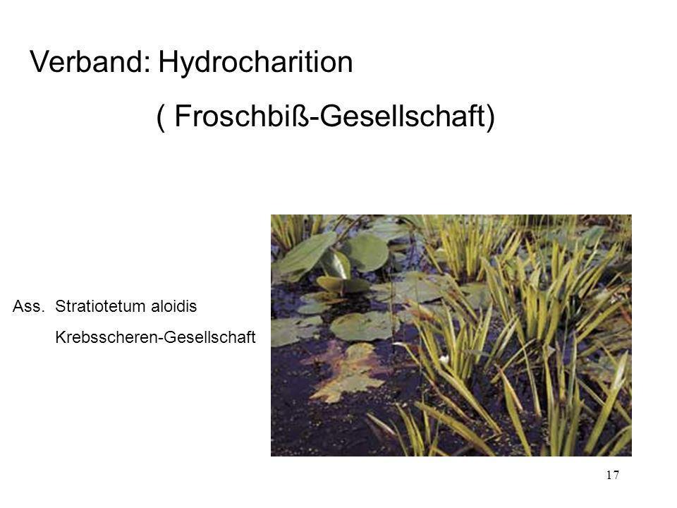 17 Verband: Hydrocharition ( Froschbiß-Gesellschaft) Ass. Stratiotetum aloidis Krebsscheren-Gesellschaft