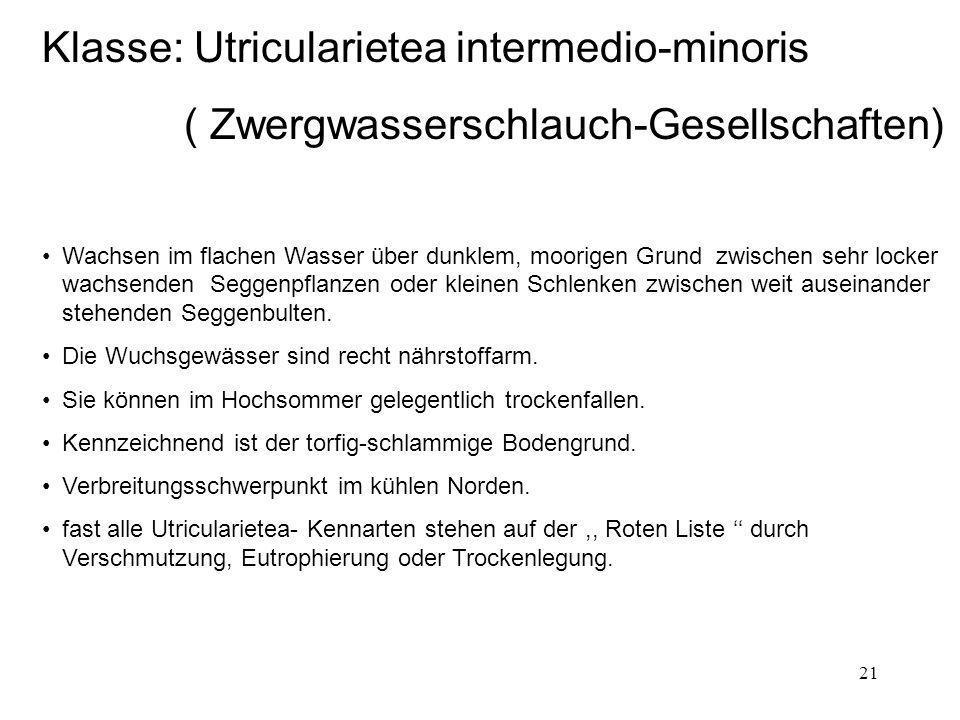 21 Klasse: Utricularietea intermedio-minoris ( Zwergwasserschlauch-Gesellschaften) Wachsen im flachen Wasser über dunklem, moorigen Grund zwischen seh