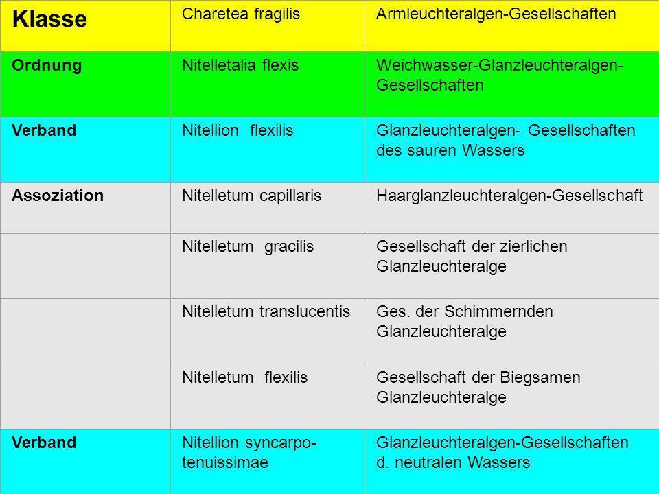 26 Klasse Charetea fragilisArmleuchteralgen-Gesellschaften OrdnungNitelletalia flexisWeichwasser-Glanzleuchteralgen- Gesellschaften VerbandNitellion f