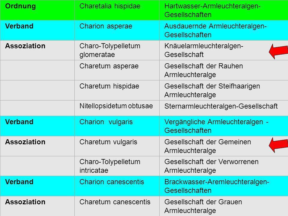 27 OrdnungCharetalia hispidaeHartwasser-Armleuchteralgen- Gesellschaften VerbandCharion asperaeAusdauernde Armleuchteralgen- Gesellschaften Assoziatio