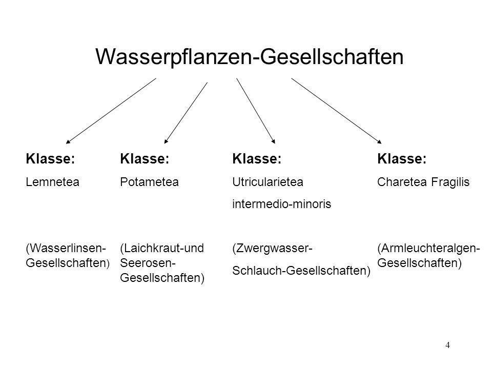 4 Wasserpflanzen-Gesellschaften Klasse: Lemnetea (Wasserlinsen- Gesellschaften ) Klasse: Potametea (Laichkraut-und Seerosen- Gesellschaften) Klasse: C