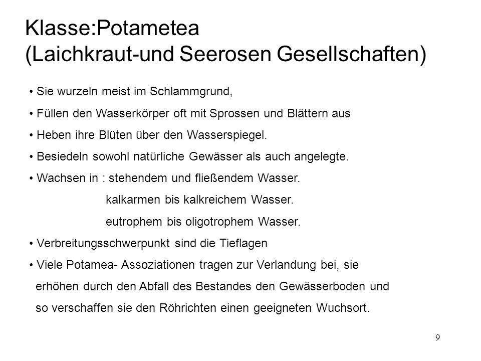 9 Klasse:Potametea (Laichkraut-und Seerosen Gesellschaften) Sie wurzeln meist im Schlammgrund, Füllen den Wasserkörper oft mit Sprossen und Blättern a